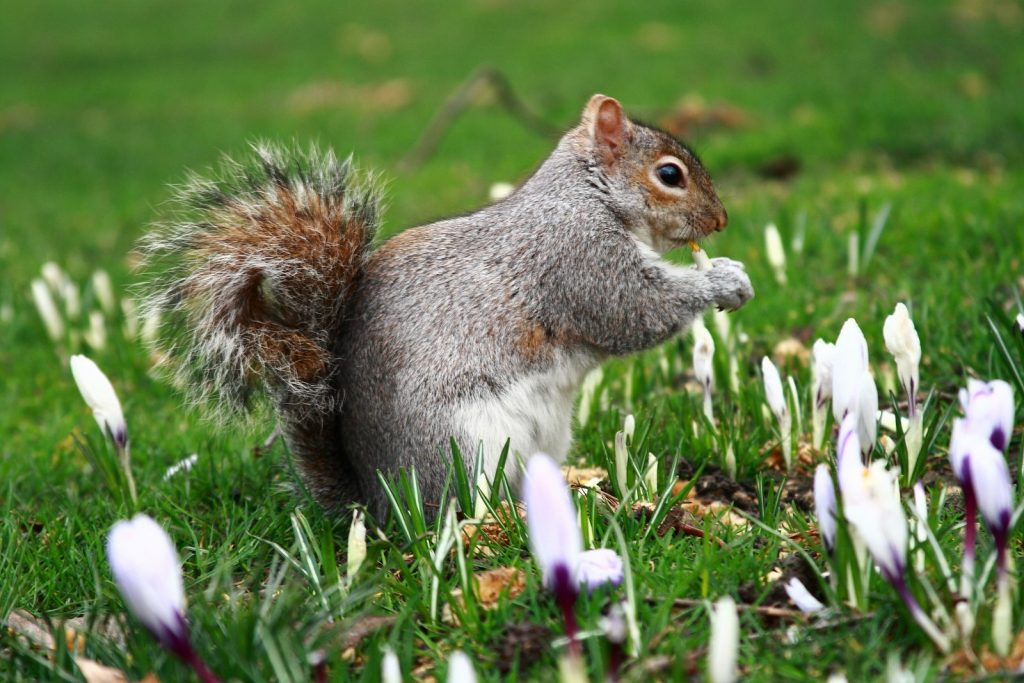 Squirrel Proofing Your Bulbs I Must Garden Blog