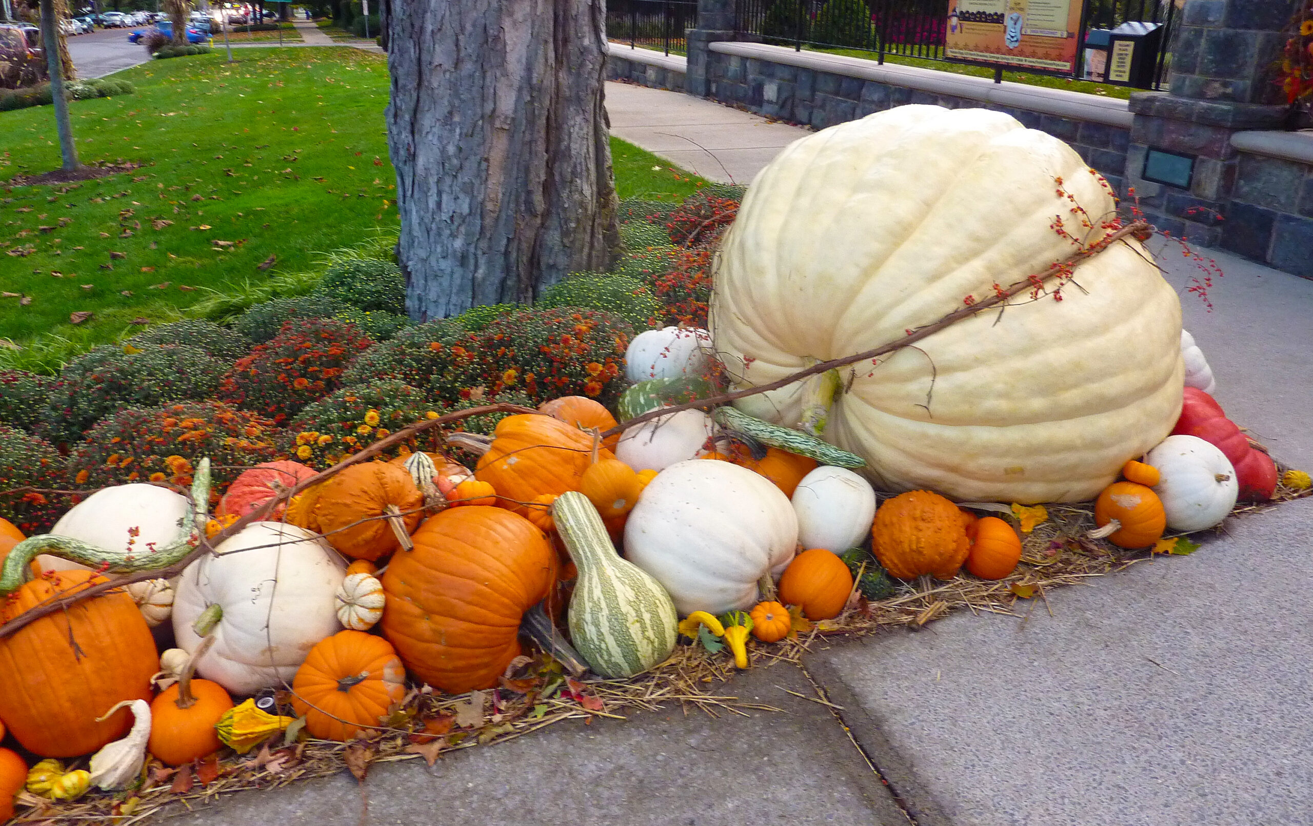 Protect your pumpkins from squirrels